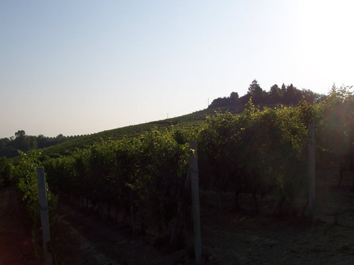 Cotta_vineyards